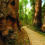 California's state parks, like Calaveras Big Trees State Park, remain the jewels of the state despite financial setbacks.