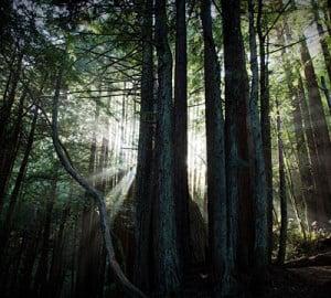 Dark forest. Photo by (matt), Flickr Creative Commons
