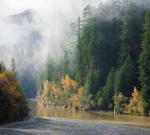 Redwoods photo by David Baselt