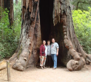 Three people stand inside the burned out trunk of a massive living redwood carved out by fire, known as a chimney tree.