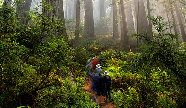 Centennial Vision For Redwoods Conservation