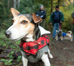 Dogs exploring Samuel P. Taylor State Park at a League sponsored Free Redwoods Day event. Photo by Paolo Vescia