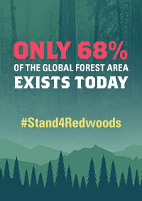 Only 68% of the global forest area exists today