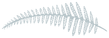 decorative graphic of a fern leaf