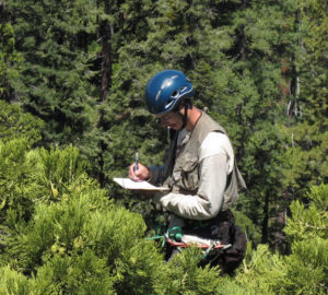 RCCI researcher collecting data. Photo by Steve Sillett.