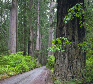 Howland Hills Road, Jedediah Smith Redwoods State Park.