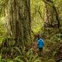 Humboldt Redwoods State Park. Photo courtesy of Humboldt State University