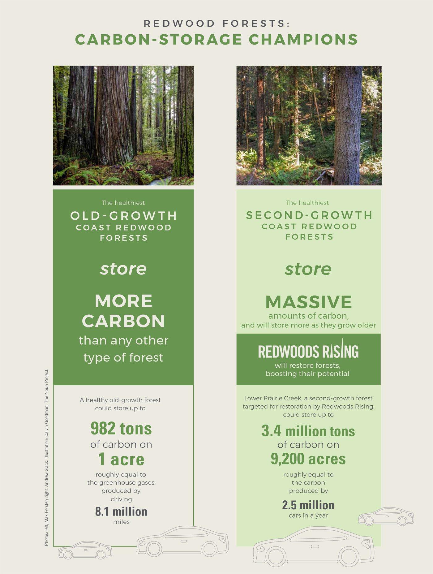 Infographic: Carbon-Storage Champions