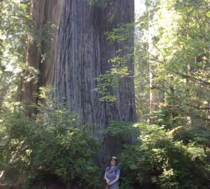 League staffer Jen Charney at Prairie Creek Redwoods State Park.