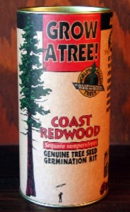 coast redwood germination kit