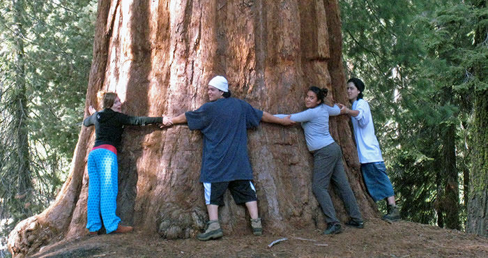 Students show their love for the giant sequoia.