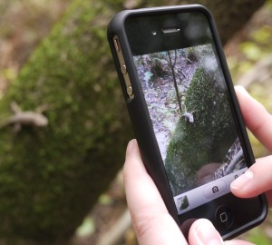 Smartphones enable volunteers to record observations of plants and animals they see. These data contribute to large datasets mined by scientists to understand where populations of organisms are thriving today and track their movements over time. Photo by Michael Limm.