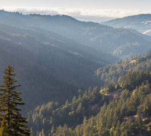 Redwood forest covers the rolling landscape of Mailliard Ranch. Protecting the ranch will safeguard these precious forests, abundant plant and animal habitat, as well as clean air and water. Photo by John Birchard.