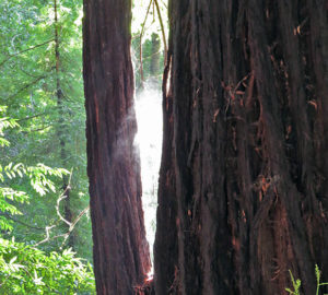 Mist rising off wet tree as it is warmed by the sun. Photo by Patricia VanEyll