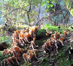 Turkey tail fungus and moss growing from deadfall. Photo by Patricia VanEyll