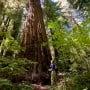 Portola Redwoods State Park. Photo by Paolo Vescia