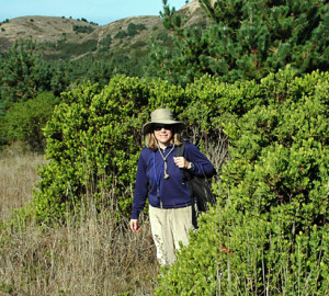 Researcher Jennifer Chapman, next to a post-fire stand of manzanitas, found that the shrub adapts to living on the edge of redwood forests.