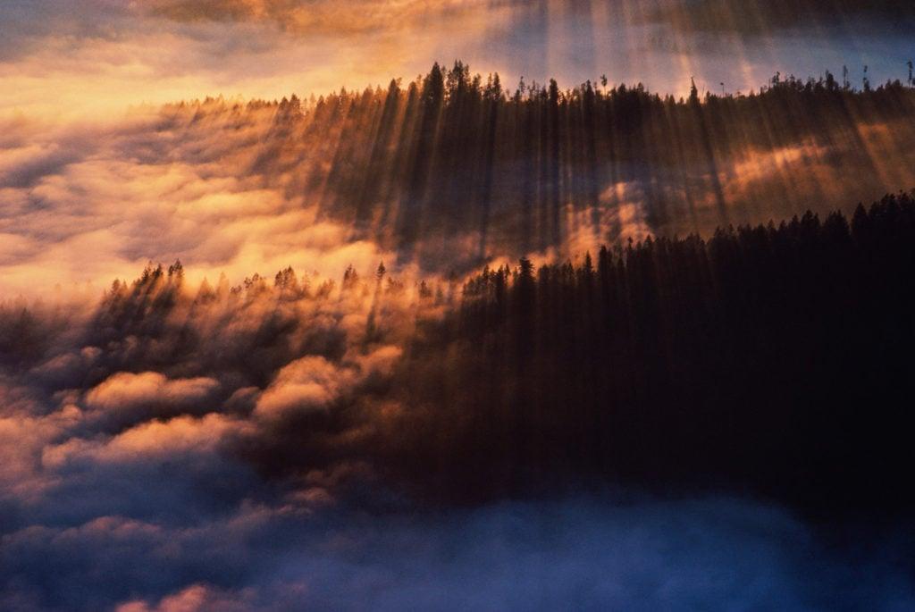 Coastal fog in redwood forest, dawn
