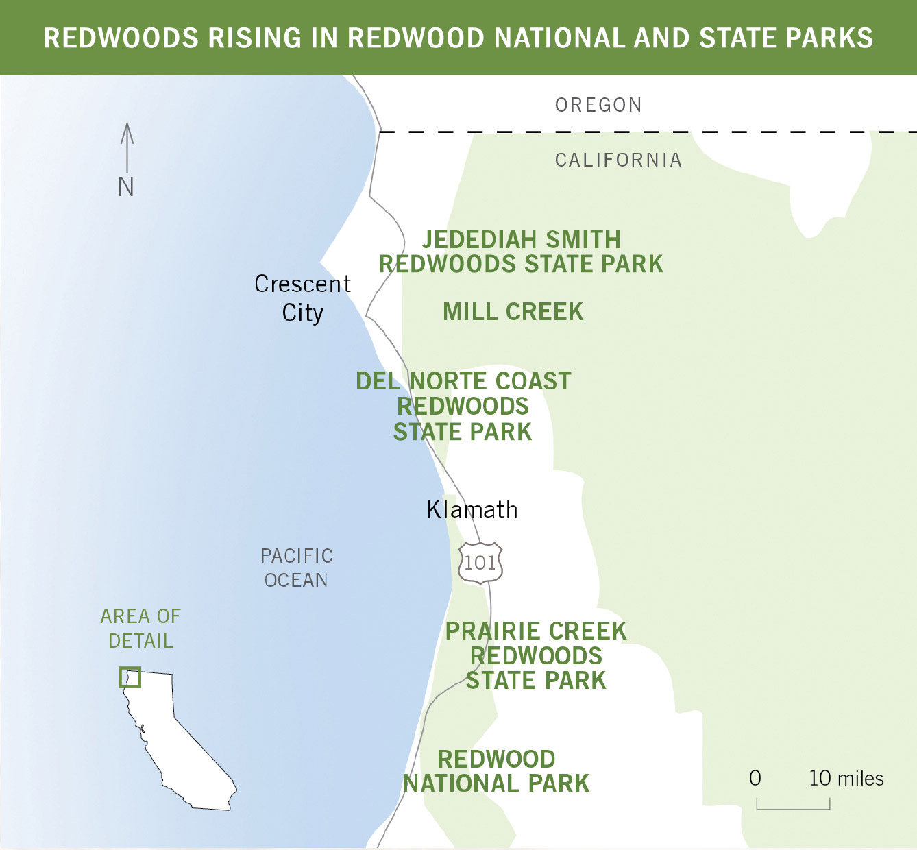 REDWOODS RISING IN REDWOOD NATIONAL AND STATE PARKS