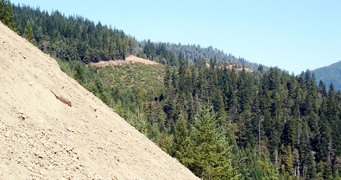 Removing logging roads, restoring the hillside's contours (as shown here) and planting trees on the site can prevent the rapid flow of sediment from suffocating the eggs of wild salmon in nearby streams. Planting also prevents loss of soil that the forest needs.