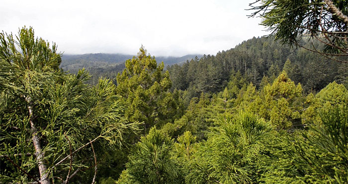 During BioBlitz 2014, League scientists climb and explore the tallest trees in Muir Woods for the first time ever.