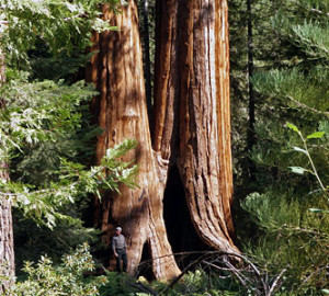 Our recent purchase of land helps protect the surrounding Giant Sequoia National Monument (pictured), home of some of the Earth's largest trees.