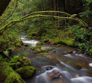 Waddell Creek, Big Basin Redwoods State Park. Photo by Michael Carl, Save the Redwoods League Photo Contest
