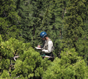 Here at the League, we love learning about the forest! Photo of RCCI researcher collecting data, by Steve Sillett.