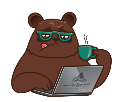 bear reading the blog