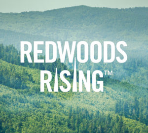 A logo for the Redwoods Rising project is overlaid on a background image displaying a vista of a mountainous landscape in which groves of redwoods stand above the rest of the forest canopy.