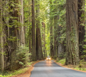 If you can't road trip through Humboldt Redwoods State Park, reading this article will help you feel like you're there.