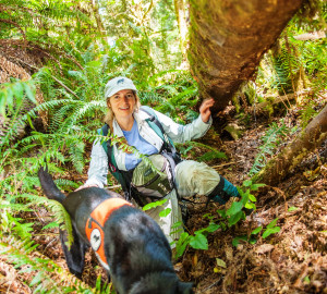 In a League-sponsored study, Wicket sniffs for the scent of white-footed vole scat. Her handler, Debbie Woollett, is Co-Founder of Working Dogs for Conservation. Photo by Humboldt State University
