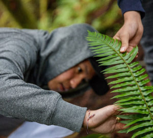 Student observes the sword fern leaves