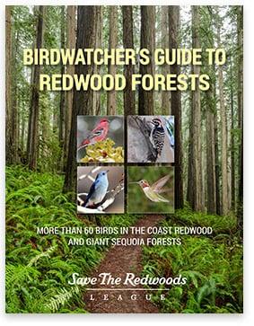 Birdwatcher's Guide