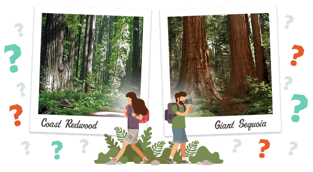 How Well Do You Know Redwoods?