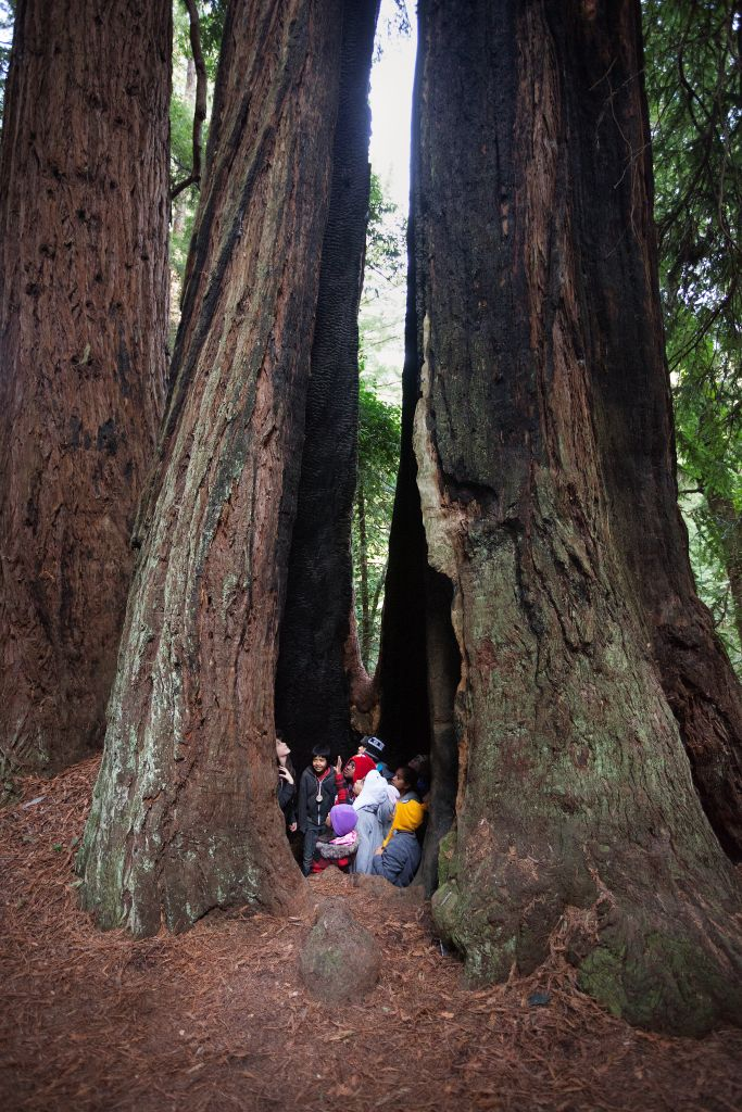 exploring a redwood forest with kids save the redwoods league